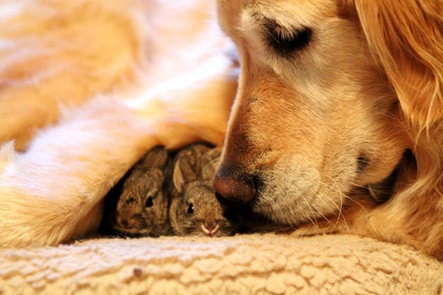 1-this-rescue-doggie-found-abandoned-bunnies-and-rescued-them-too-img-3rj-625x416